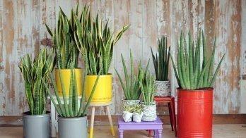 Les dernières tendances des plantes d'intérieur